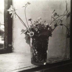 Josef Sudek – 1.8. Kytička lučních květin