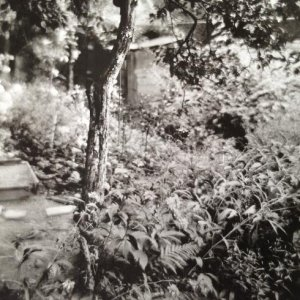 Josef Sudek – 1.9. Zahrádka na kterou se dívám, 1955