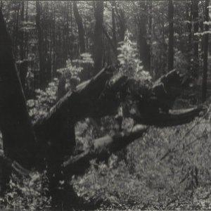 Rudolf Janda – Prales Mionší